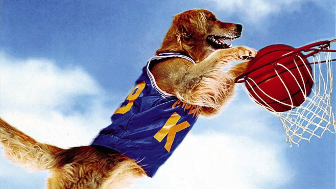Are You Air Bud Or A Starving College Student?
